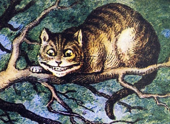 kot-alicja-cheshire